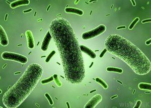 Maitohappobakteerit – 7+ uskomatonta terveyshyötyä