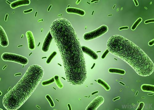 probiootit